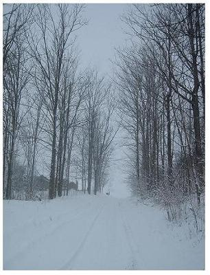 Winter scenery in Ontario