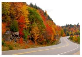 fall in Ontario, colourful leaves beside the road