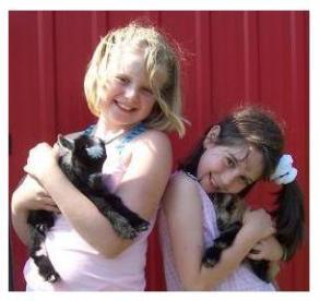 Pygmy goats - Sunnybrook Farm