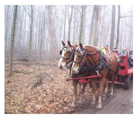 Horse drawn wagon ride through Carolinian forest at Springwater Conservation Area, Orwell, Ontario