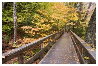 wooden bridge on a hiking trail in Ontario in fall