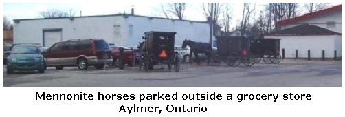 Mennonite horse & buggies