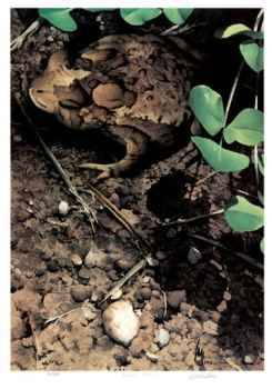 Mr Toad by Carl Arlen