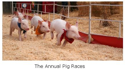 Pig Races in Simcoe, Ontario
