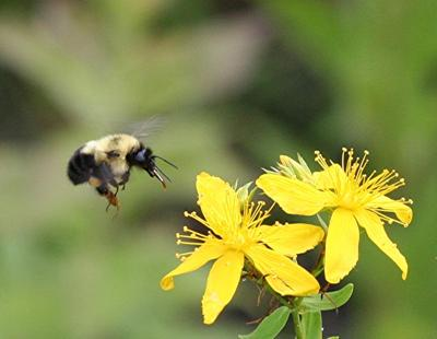 Buzzzzy Bee