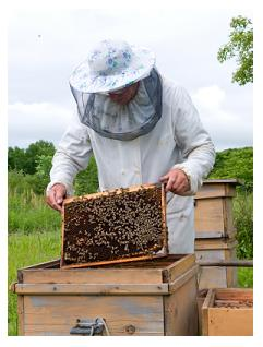 Bee keeper in Ontario