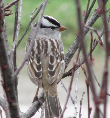 unknown Ontario bird