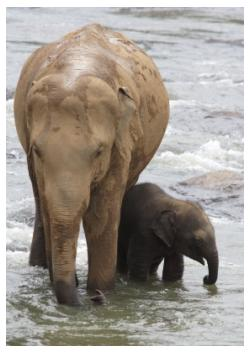Elephant Mother and baby, African Lion Safari, Ontario