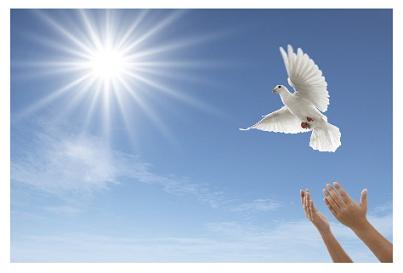 hands releasing a white wedding dove in the sunshine with blue background