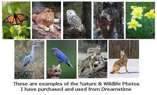 Nature and Wildlife pictures