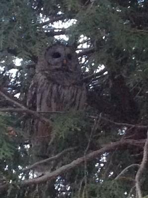 unknown bird found in Ontario