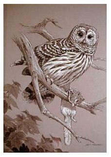 Owl with prey - Flying Squirrel