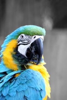 African Lion Safari - Parrot