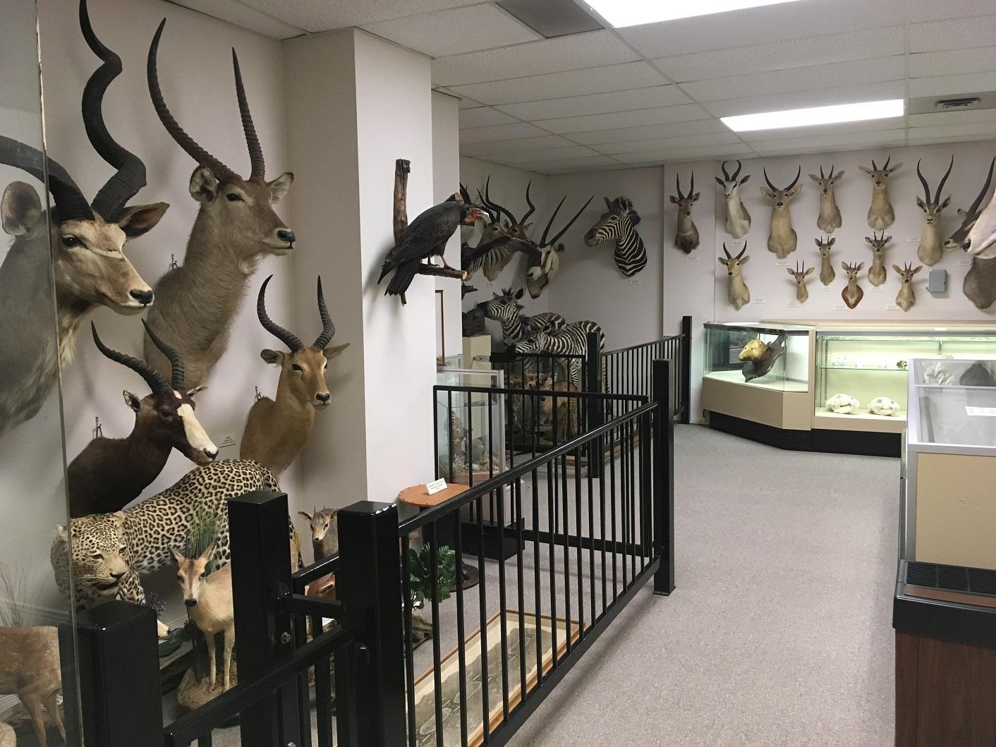 stuffed animals, stones and bones museum