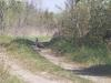 Peafowl on back road in Northern Ontario