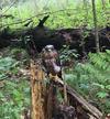 Unknown bird of prey