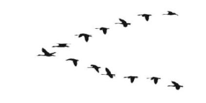 Flying Geese migrating south for the winter