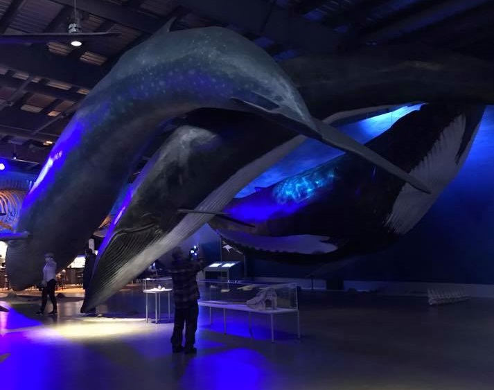Whales of Iceland Exhibition Reykjavik 2017
