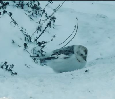 Ontario wild birds in Canada