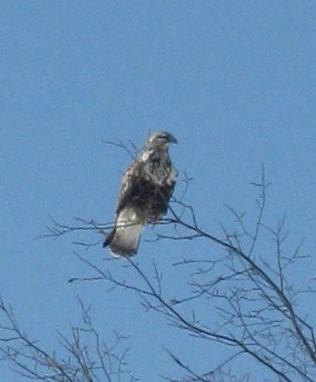 Mystery bird in Powassan, Ontario