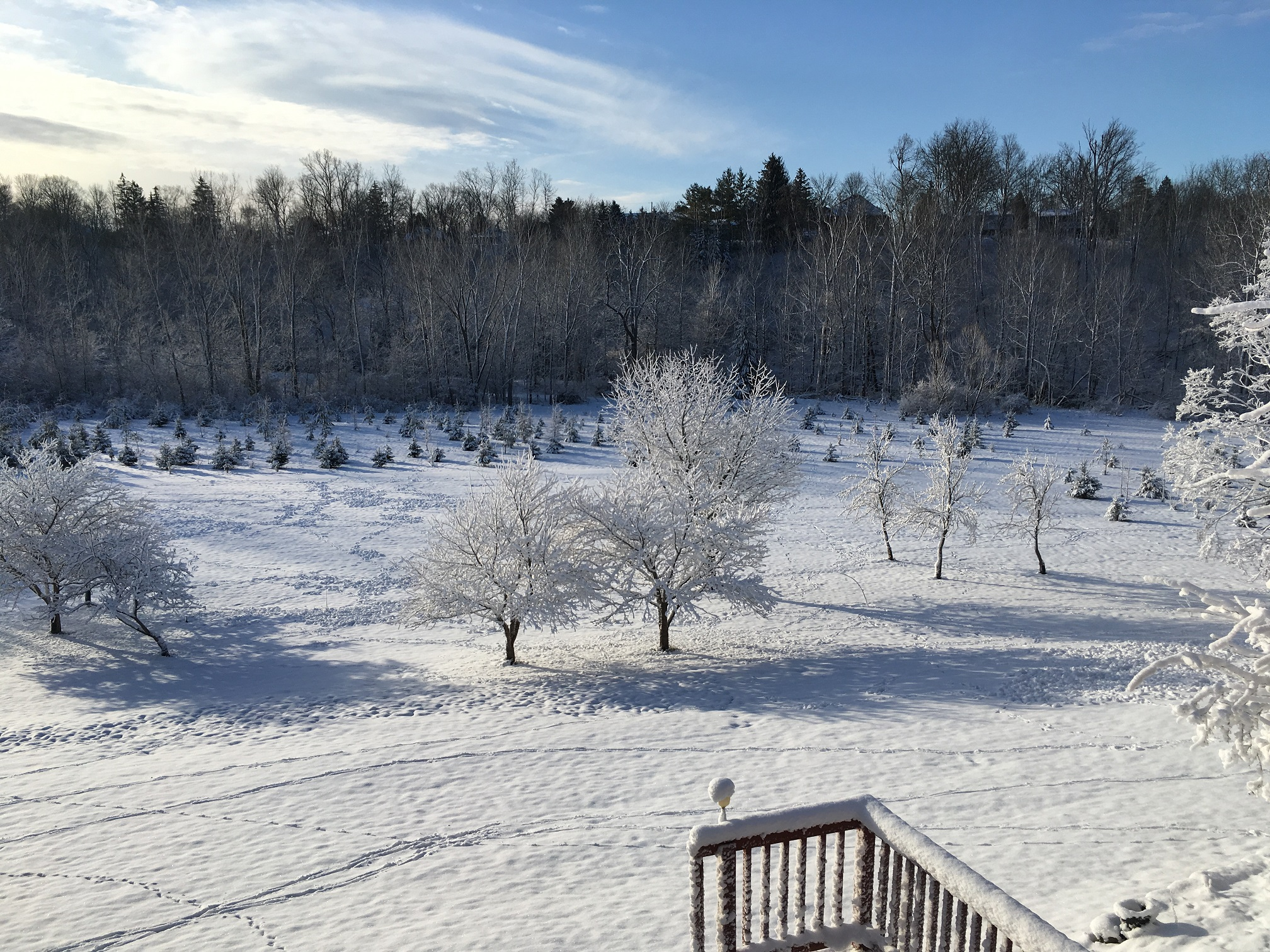 Snow on the meadow and on the trees, St Thomas, Ontario
