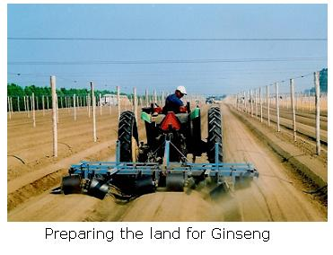 Tractor working Ginseng
