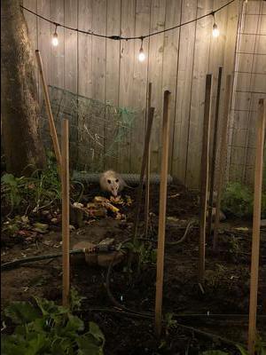 Ajax Opossum