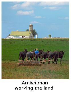 Amish Farm, Southern Ontario, Canada