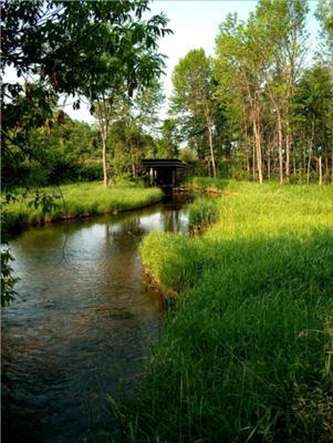Arden Creek