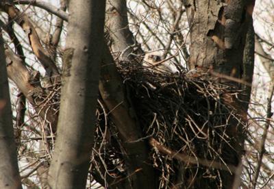 Owl nest