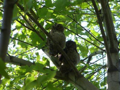 Two of Five near Gage Park, Hamilton, Ontario