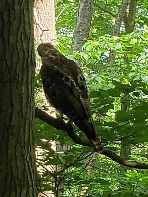 Bird of prey at Homer Watson Park
