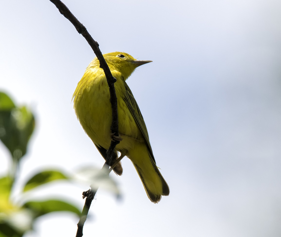 The migrating birds at Point Pelee