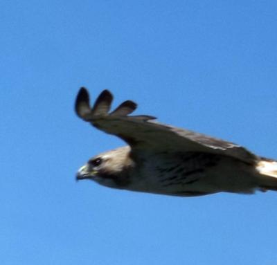 swooping past me