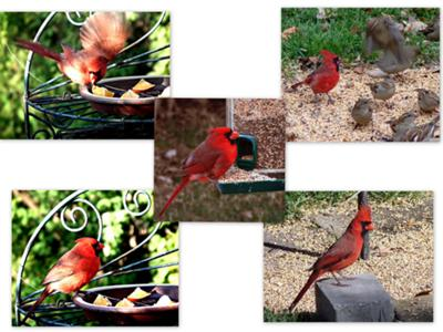 Lots of Cardinals