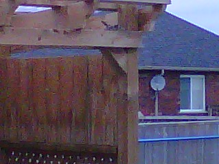 the bird in the nest
