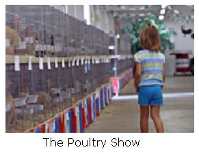Poultry Show - Simcoe, Ontario