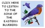 The song of the Eastern Bluebird
