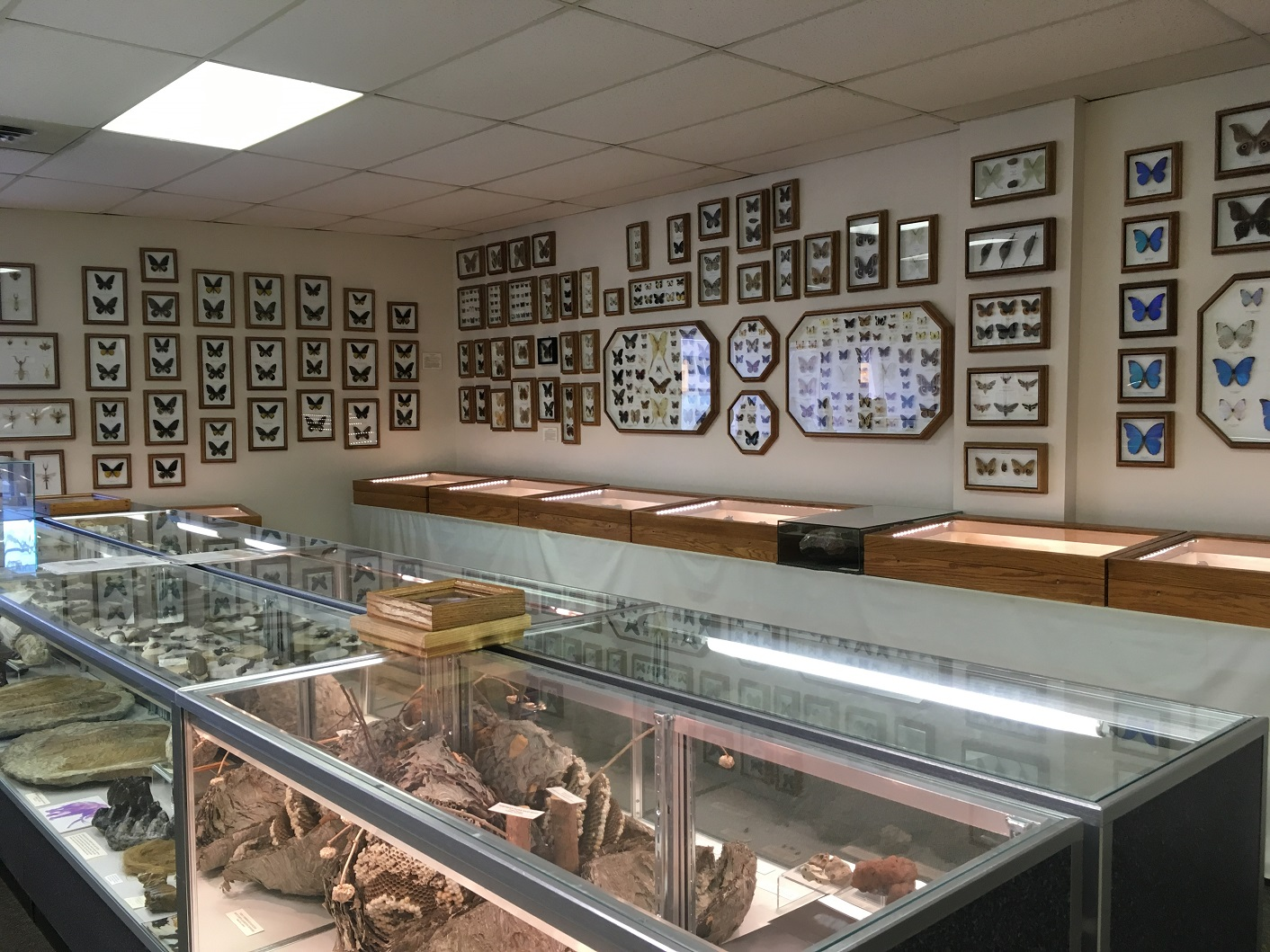 Stones 'N Bones Museum, Sarnia, Ontario