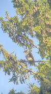 Mystery bird of prey