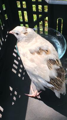 Unknown bird in Paisley, Ontario